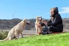 Haustiere und Hunde Ausbildung und Hunde erziehend Begleiter streichelt Konzept Lizenzfreie Stockfotos