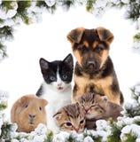 Haustiere und neues Jahr lizenzfreie stockfotos