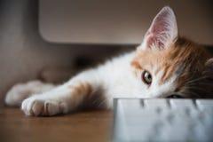 Haustiere zu Hause Stockfoto