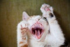 Haustiere zu Hause Lizenzfreies Stockbild
