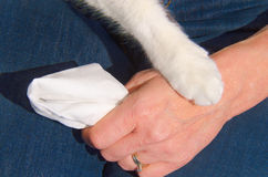 Haustiergesellschafts-Verhältnis-Komfort Stockfotos