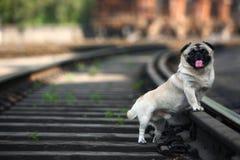 Haustierhund Lizenzfreie Stockfotografie