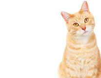 Haustierkatze. Stockbilder