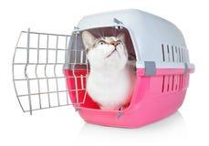 Haustierkatze in einem Käfig für Transport mit der Tür offen. Lizenzfreie Stockfotografie