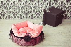 Haustiermatratze im Raum Lizenzfreie Stockfotografie
