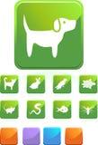 Haustierweb-Tasten - Quadrat Stockfotografie