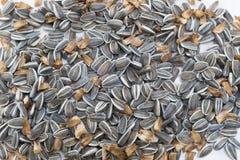 Haut étroit cru de graines de tournesol photos stock