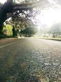 Haut étroit d'arbres de jour de rue image libre de droits