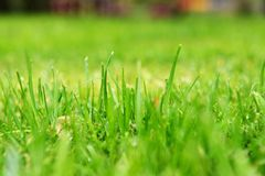 Haut étroit d'herbe Image libre de droits