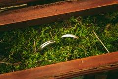 Haut étroit de bagues de fiançailles de mariage Photographie stock