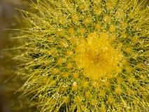 Haut étroit de cactus Image libre de droits