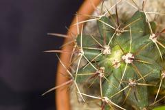 Haut étroit de cactus Photographie stock libre de droits