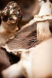 Haut étroit de champignon Photographie stock libre de droits