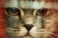 Haut étroit de chats drôles Images stock