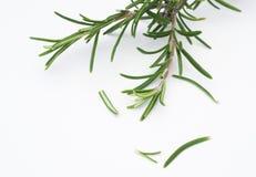 Haut étroit de feuilles de Rosmarin Image stock