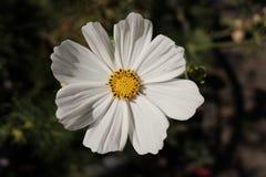 Haut étroit de fleur Image stock