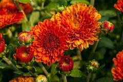 Haut étroit de fleur maintenant Photo stock