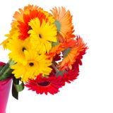 Haut étroit de fleurs de Gerbera Photo libre de droits
