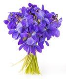 Haut étroit de fleurs de violettes de ressort Image libre de droits