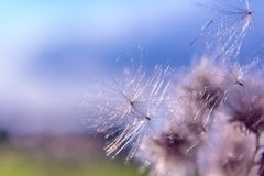 Haut étroit de fleurs en filigrane abstraites de nature Photographie stock libre de droits