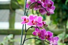Haut étroit de fleurs pourpres Image libre de droits