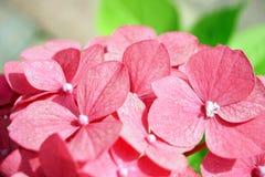 Haut étroit de fleurs roses photo stock