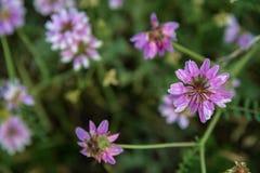Haut étroit de fleurs roses foncées Photos libres de droits