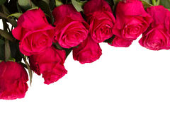 Haut étroit de fleurs roses fraîches Images stock