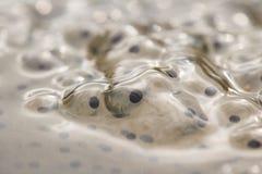 Haut étroit de frai de grenouilles Photos libres de droits