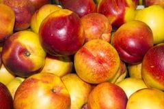 Haut étroit de nectarine. Nectarines organiques fraîches. Tas de mûr frais Images libres de droits