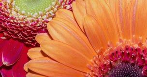 Haut étroit de pétales oranges de fleur Photographie stock