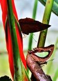 Haut étroit de papillon Photos stock