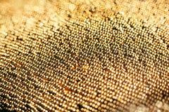 Haut étroit de perles d'or Photos stock