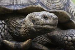 Haut étroit de tortue Image stock
