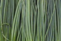 Haut étroit frais d'oignons verts Photo stock