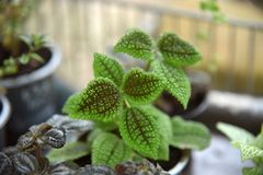 Haut étroit rayé de plantes ornementales de feuille Photo de belles fleurs dans des pots image stock