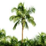 Haut arbre de noix de coco d'isolement sur le fond blanc photos stock