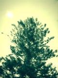 Haut arbre vert Photo libre de droits