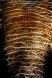 Haut auf einem Stamm des Elefanten Stockbild