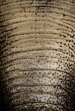 Haut auf einem Stamm eines Elefanten Lizenzfreie Stockbilder