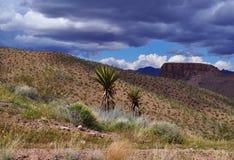 Haut désert Photo libre de droits