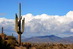 Haut désert avec le cactus, les montagnes et les nuages Photographie stock