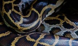 Haut der birmanischen Pythonschlange, Pythonschlange bivittatus, rote Listen-Daten IUCN verletzbar stockbild