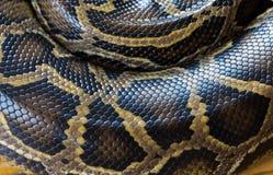 Haut der retikulierten Pythonschlange stockfotografie