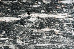 Haut des Baums Stockfoto
