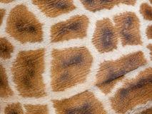 Haut des echten Leders der Giraffe Stockbild