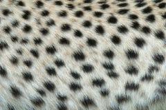 Haut des Leoparden Stockfoto