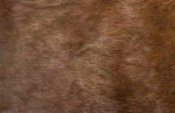 Haut eines Rotwilds Stockbild