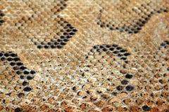 Haut (Leder) der Eidechse bräunte sich (inured). Stockbild