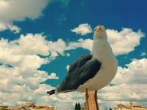 Haut oiseau Images libres de droits